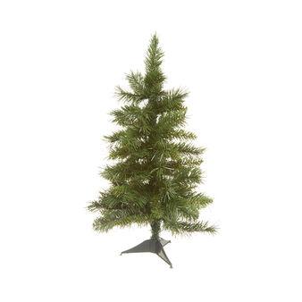 H60 pine sapling
