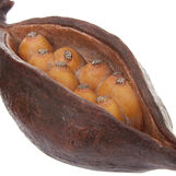 Hand-finished decorative cocoa bean